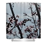 Cherry Blossom Transparency Shower Curtain