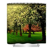 Cherry Blossom Trees Shower Curtain