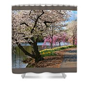 Cherry Blossom Trees Of Branch Brook Park 17 Shower Curtain