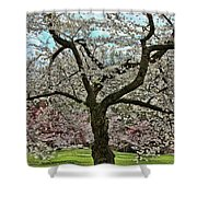 Cherry Blossom Trees Of Branch Brook Park 31 Shower Curtain