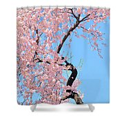 Cherry Blossom Trilogy IIi Shower Curtain