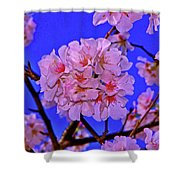 Cherry Blossoms 004 Shower Curtain