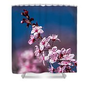 Cherry Blossoms 3 Shower Curtain