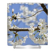 Cherry Blossoms And Bumblebee Shower Curtain