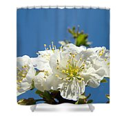 Cherry Blossoms Art White Spring Tree Blossom Baslee Troutman Shower Curtain