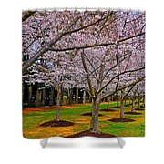 Cherry Blossoms At The Beach Shower Curtain