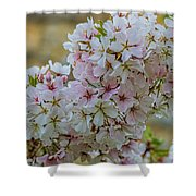 Cherry Blossoms Browns Island 7124t Shower Curtain