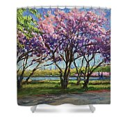 Cherry Blossoms, Central Park Shower Curtain