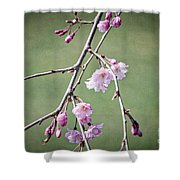 Cherry Blossoms In Early Spring Shower Curtain