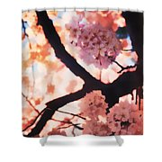 Cherry Blossoms In Washington D.c. Shower Curtain