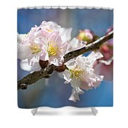 Cherry Blossoms On Blue Shower Curtain