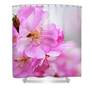 Cherry Blossoms Sweet Pink Shower Curtain