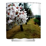 Cherry Blossoms Trail Shower Curtain