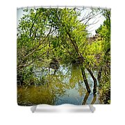 Cherry Creek Trail Study 3 Shower Curtain