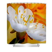 Cherry Flower In The Spring, In Profile Shower Curtain