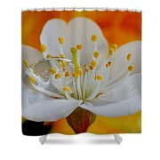 Cherry Flower In The Spring Shower Curtain