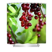 Cherry Jubilee Shower Curtain