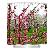 Cherry 'n' Apple Blossoms Shower Curtain