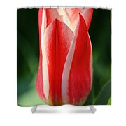 Cherry Pin Stripes Shower Curtain