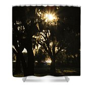 Cherry Point Trees Shower Curtain
