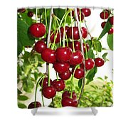 Cherry Time Shower Curtain