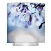 Cherry Tree Blossoms In Morning Sunlight Shower Curtain