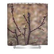 Cherry Tree Shower Curtain