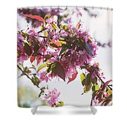 Cherry Tree Flowers Shower Curtain