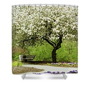 Cherry Tree In Full Bloom Shower Curtain