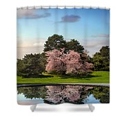 Cherry Tree Reflections Shower Curtain