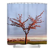 Cherry Tree Standing Alone In A Park, Lit By The Light  Shower Curtain