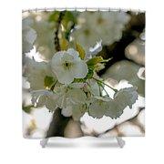 Cherryblossom Flowers 4 Shower Curtain