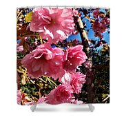 Cherryblossoms Perspective  Shower Curtain
