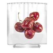 Cherrys Prunus Avium Shower Curtain