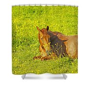 Chess Nut Horse Shower Curtain