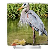 Chest Feathers Shower Curtain