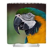 Chester II Shower Curtain
