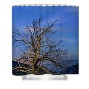 Centenary Chestnut At Blue Hour Shower Curtain