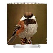 Chestnut-backed Chickadee  Shower Curtain