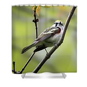 Chestnut Sided Warbler 2 Shower Curtain
