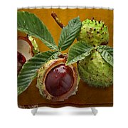 Chestnuts 3 Shower Curtain