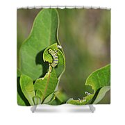 Chewing My Way To Adulthood Shower Curtain