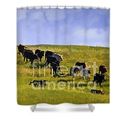 Cheyenne Cattle Roundup Shower Curtain