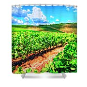 Chianti Vineyard In Tuscany Shower Curtain