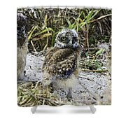 Chick Burrowing Owl  Shower Curtain