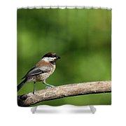Chickadee . 40d8031 Shower Curtain