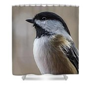 Chickadee Close Up Shower Curtain