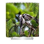 Chickadee Feeding Time Shower Curtain