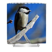 Chickadee Moments Shower Curtain