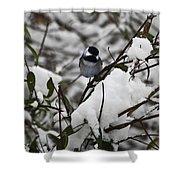Chickadee On The Jasmine Shower Curtain